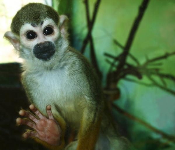 Monkey by Clarabinks