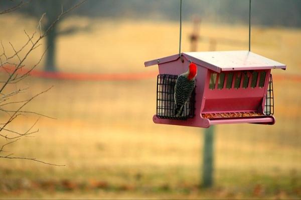 Grandma\'s Bird House. by EmmaBeth