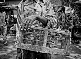 Bird seller in Dakar