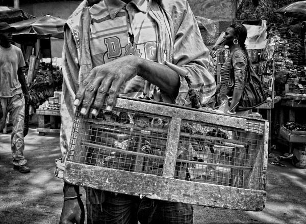Bird seller in Dakar by luceombra