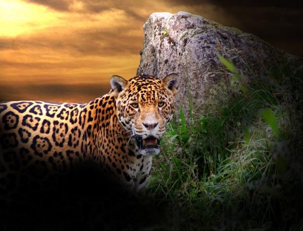 Night Hunter by gingerdelight