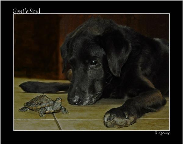 Gentle Soul by Ridgeway
