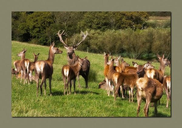 The Herd by skye1