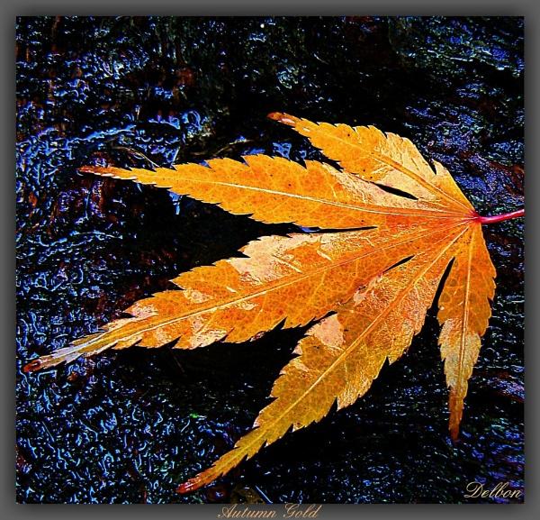 Autumn Gold by Delbon