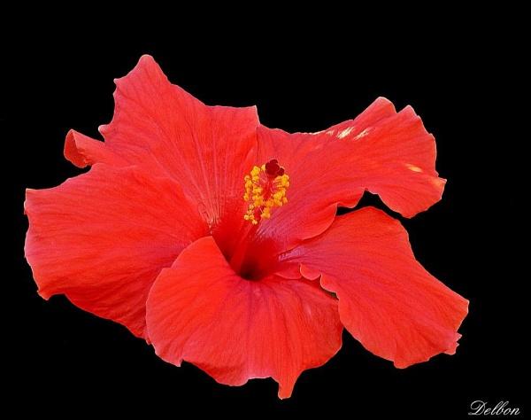Cyprus Flora by Delbon