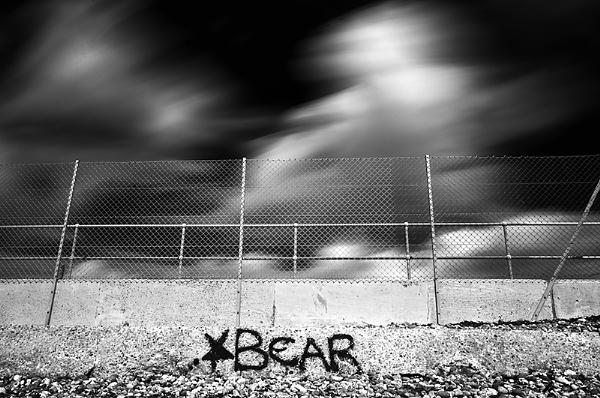 Follow The Bear