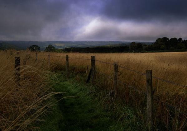 field by Swanvio