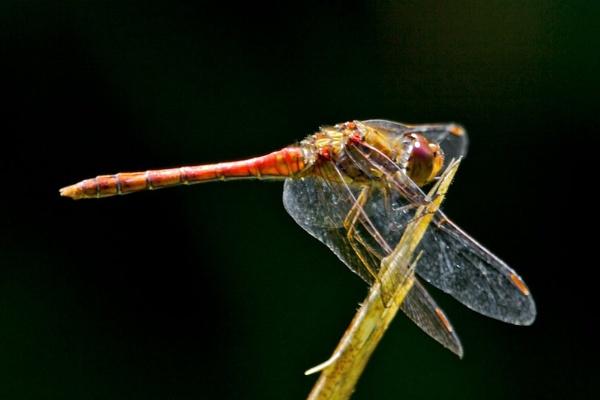 dragon fly 2 by phil19belfield