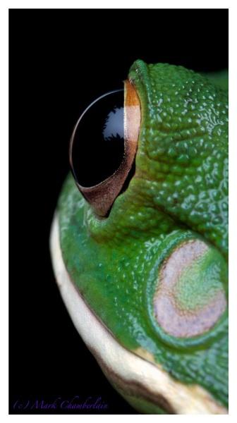 Eye of.... by marktc