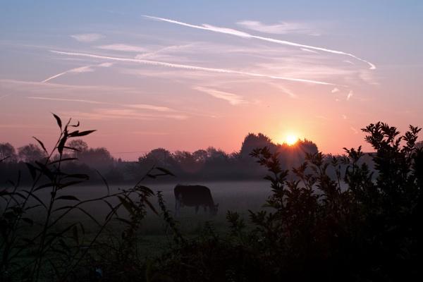 Holstein Dawn by MikeJG