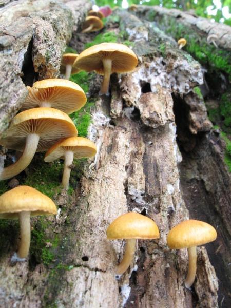 Mushrooms by shadow18