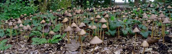 Mushroom Forest by Gregoir