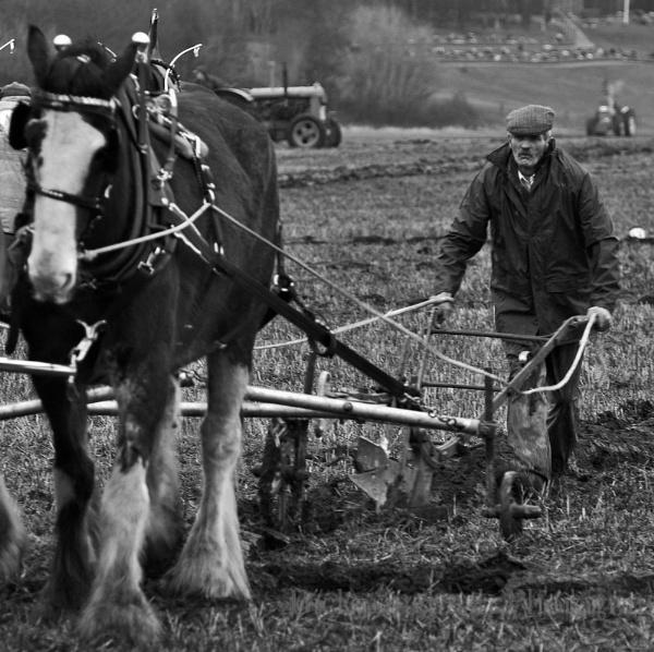 Drybridge Ploughing by Bickeringbush