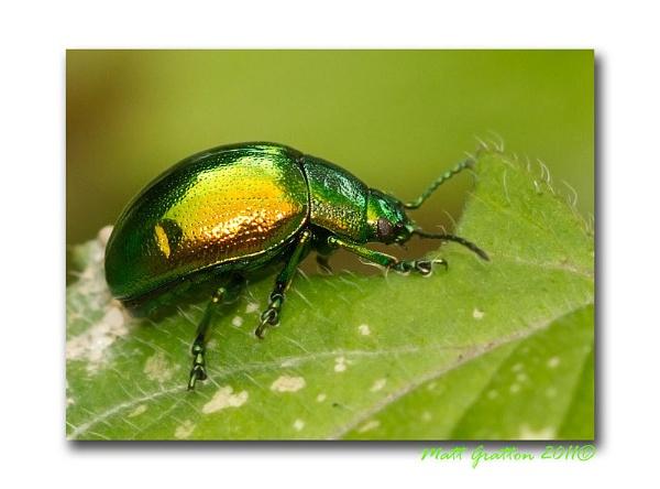 Metallic Green by mohikan22