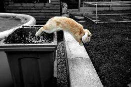 My naughty Bunny