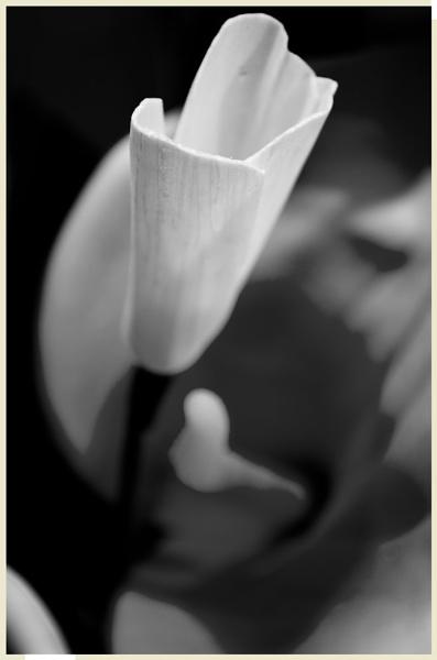 Orange Lilly by MrBMorris