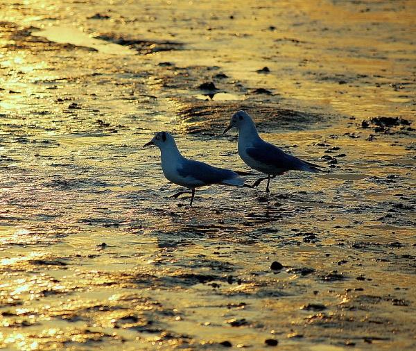 wading birds suffolk estuary by cathsnap