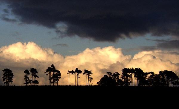Tree Silhouette by macroman