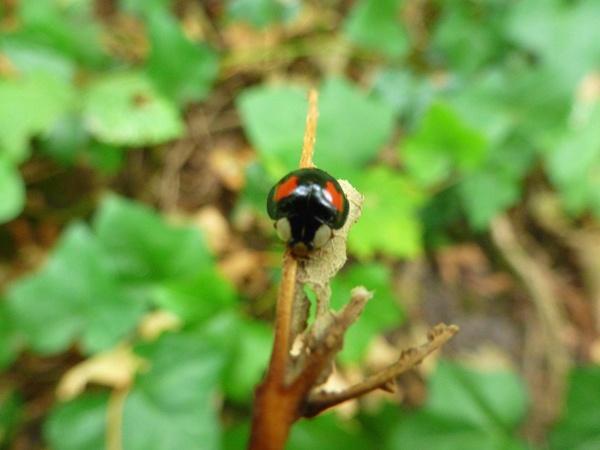 Ladybird by seaviewlou