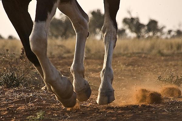 Hooves in Motion by Msalicat
