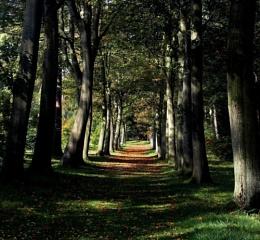 Autumn Begins.........