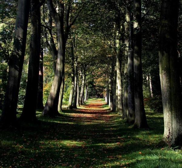 Autumn Begins......... by dascmor