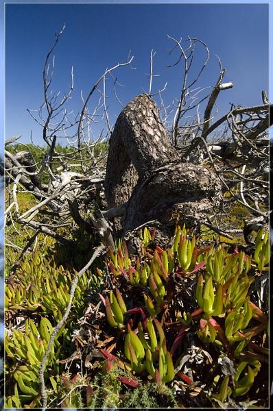 deadwood by annettep38