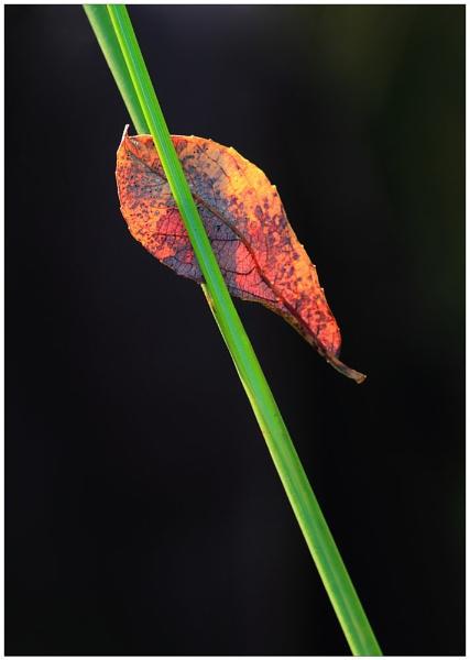 Autumn Suspended