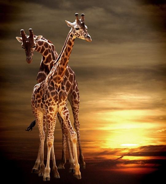 Sunset #3 by gingerdelight