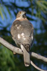 watching bird by dsrathore999