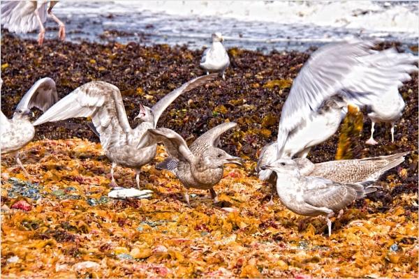 Squaking Seagulls by Daisymaye