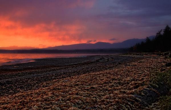 Early Morning by Daisymaye