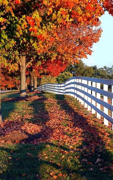 Fall at Sagamore Farm, by Bibeault