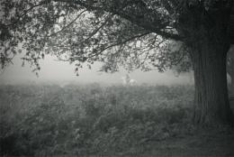 horseman in mist
