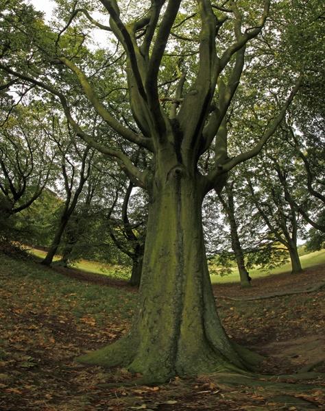 Tree panorama by chrisJA