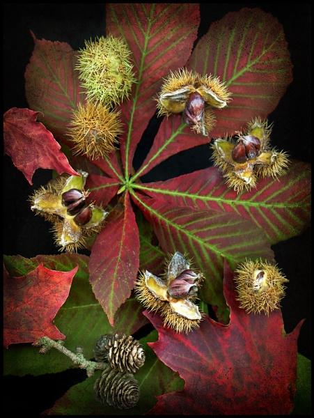 Autumn Bounty (2). by Niknut