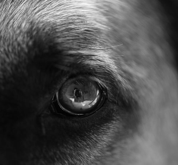A Shepherds eye... by JadeClark