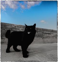 cat in Latsi