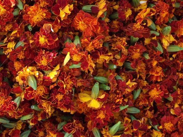 Dusherra flowers by santosh275