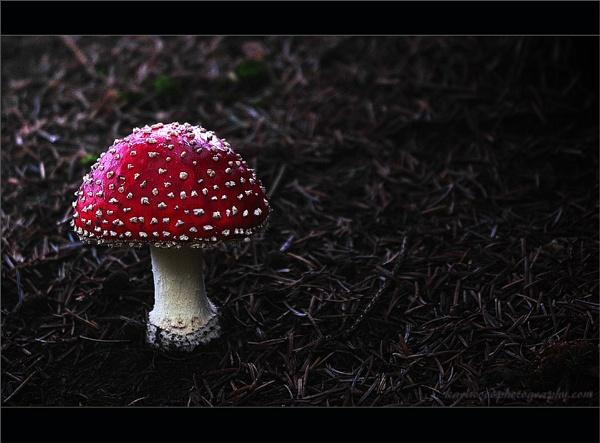 Toadstool.... by woodlark