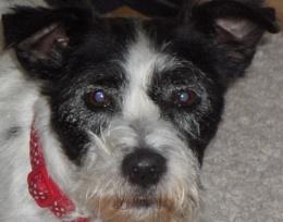 My doggie!! Jelly!! xxx