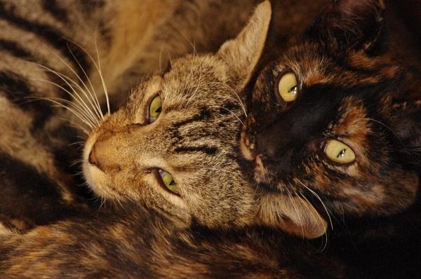 feline friendship by Raisa