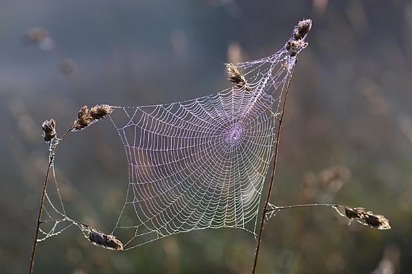 Web by mattberry
