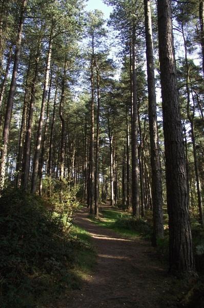 Woodland Trail by Rebecca31