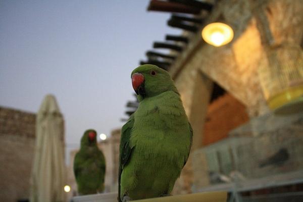 Birdi nam nam by astyag