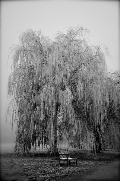 Winter in Warwick by woolie