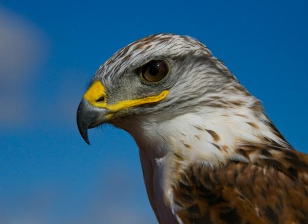 bird? by ATHERTON
