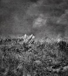 Edge of the Dunes.