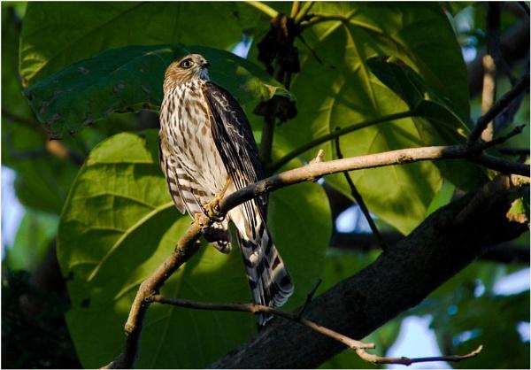 Lucky Bird by Daisymaye