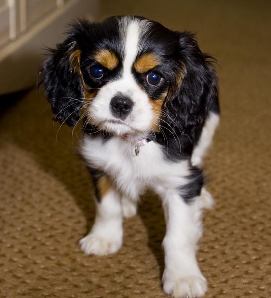 My little puppy Ive by Gordonsimpson